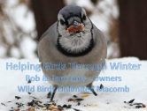 Helping Birds Through Winter
